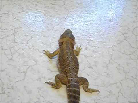 Havoc's Kitchen Floor Journey 2012-04-20.wmv