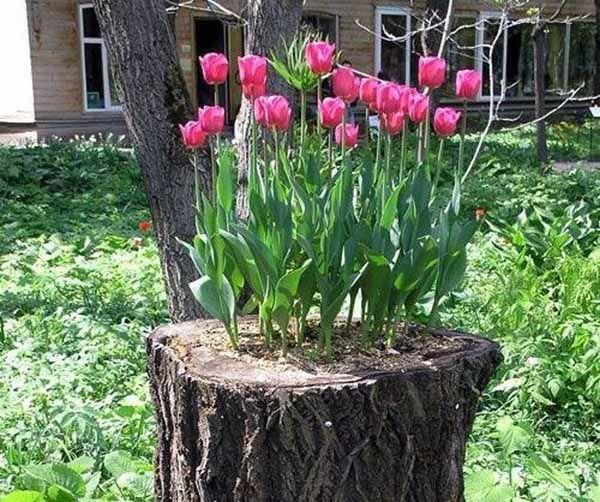 ideias de jardins lindos: os passos para criares lindos canteiros de flores em troncos secos