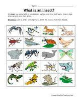 38 best creepy crawling flying bugs images on pinterest. Black Bedroom Furniture Sets. Home Design Ideas