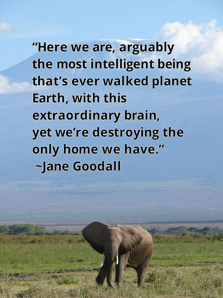 """15 Life Lessons Learned From Primatologist Jane Goodall.""   ...   Key words: 'arguably' and 'intelligent'. We humans defined ourselves as intelligent, but we obviously got it very, very wrong...."