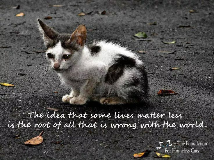 I can't not see pictures like this & be saddened by those who buy cats from breeders.