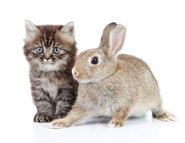 Gatos, liebres y detectives privados