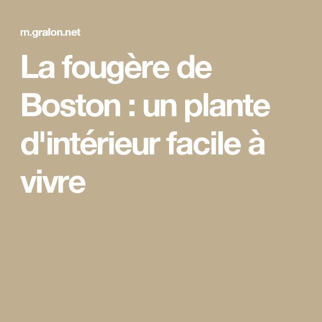 Les 25 meilleures id es de la cat gorie foug res de boston for Fougere d interieur plante
