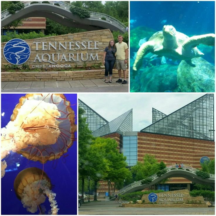 Things to Do: Visit the Tennessee Aquarium! Definitely one of my favorite activities I did while in Chattanooga. Perfect for the whole family or just for a date. There are 2 parts to this aquarium: The River Journey and Ocean Journey. Some of the most notable parts were getting to watch the penguins show off, petting manta rays and sting rays, and watching the huge seaturtles and sharks. Don't forget to also purchase a 45 minute IMAX movie with your aquarium visit, it is definitely worth it!