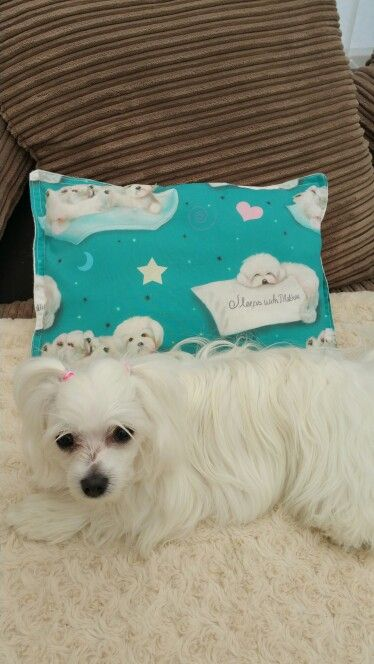Gorgeous I sleep with Maltese pillow top quality designer fabric for sale in Pixies Posh Pets or email us at Pixiesposhpets@yahoo.co.uk