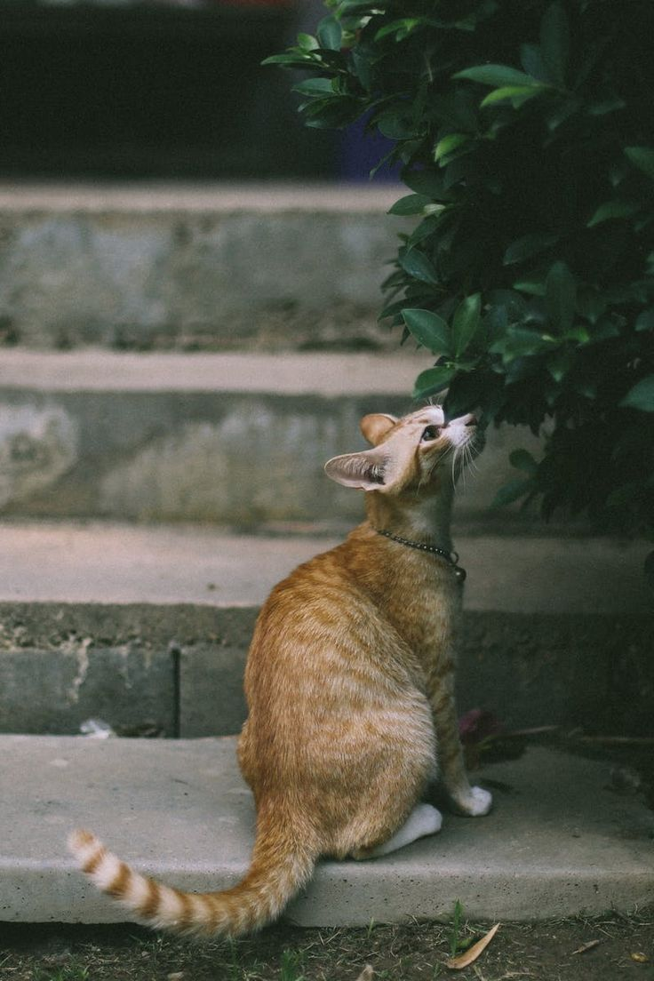 17 Terbaik Ide Tentang Kucing Betina Di Pinterest Kucing Anak