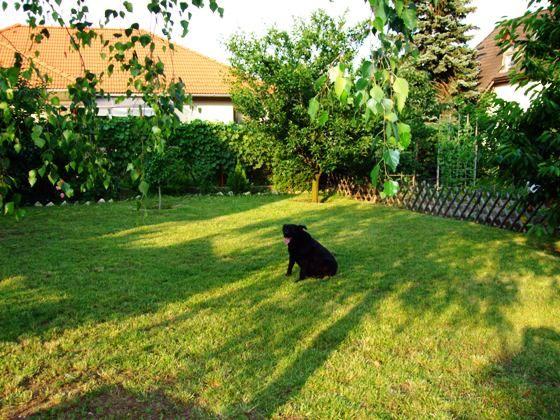 Cuci ül a fűbe, imádom őt!