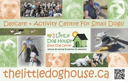 The Little Dog House