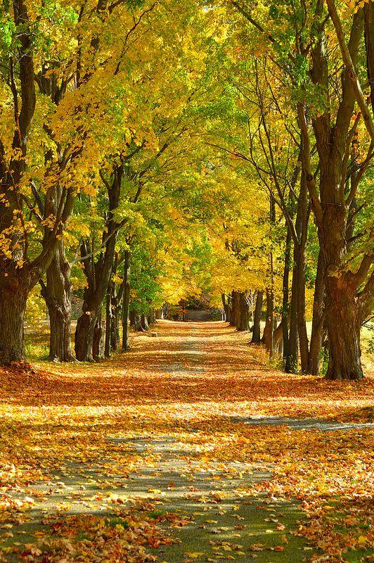 Fall Foliage in Milton, Massachusetts