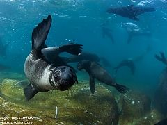 Swimming with Seals in South Africa: Apex Shark Expeditions in Cape Town
