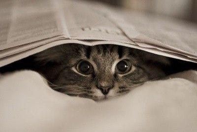 here kitty kitty kitty :)Kitty Cat, Cat Eye, Peek A Boos, Kittens, Weights Loss, Crazy Eye, Newspaper, Animal, Baby Cat