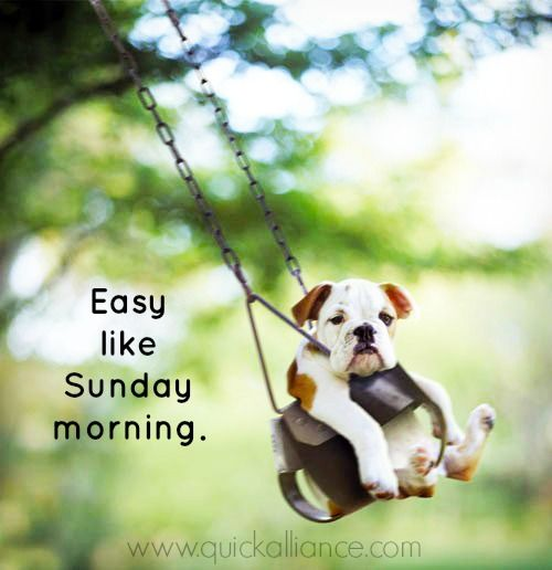 Easy like Sunday morning. Happy #Sunday!