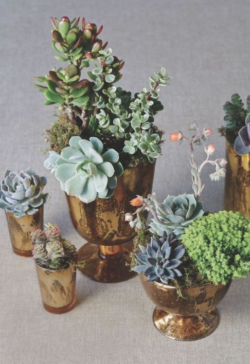 potted succulents... Mercury Glass & bronze sprayed containers or Terra-cotta pots instead