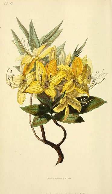 500 best images about botanical illustrations 2 on for Botanical tattoo london