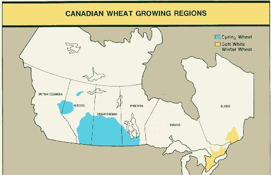 Frumento, Canada: le semine superano le attese - Materie Prime - Commoditiestrading