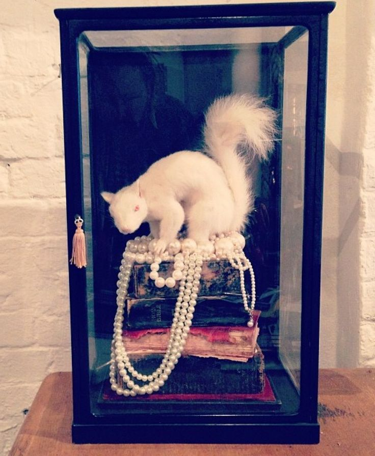 Squirrel in a box sitting on antique books and wearing pearls.