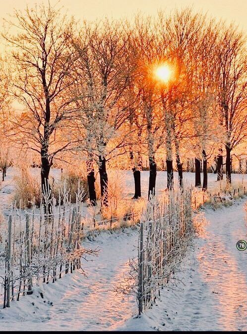 Winter outdoors fall color sunset