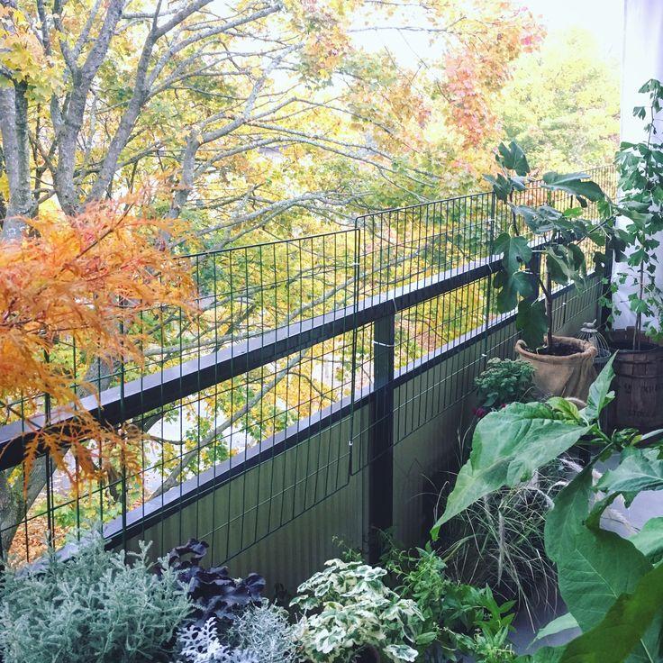 Höst på balkongen