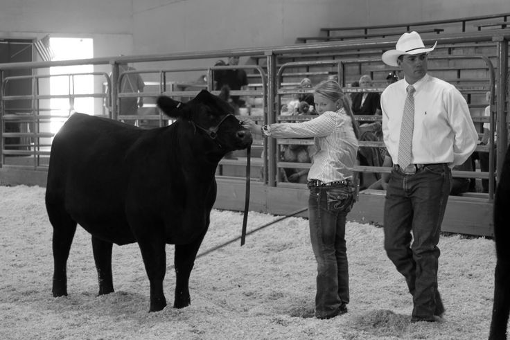 AMAZING BLOG! Success is Reason Enough: Why showing livestock matters.