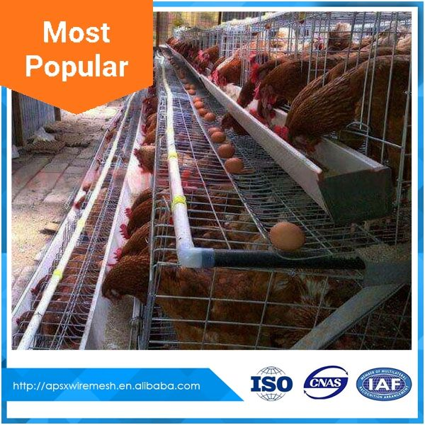 poultry equipment manufacturer automatic layer chicken cage