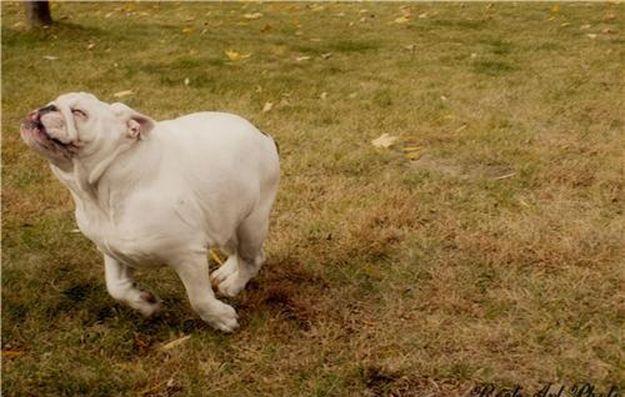 Lovin life!Cute Animal, Born Free, Funny Animal Pics, Happy Day, English Bulldogs, Happy Animal, Happy Pictures, Happy Dogs, Happy Puppies