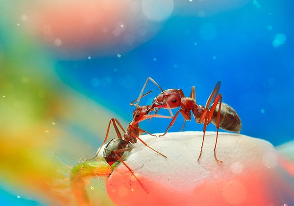Surreal Macro Photographs of Insects