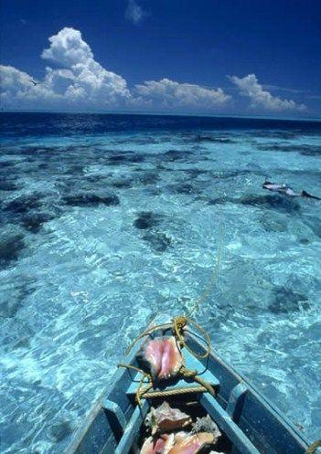 Yucatán | ARRECIFE ALACRANES