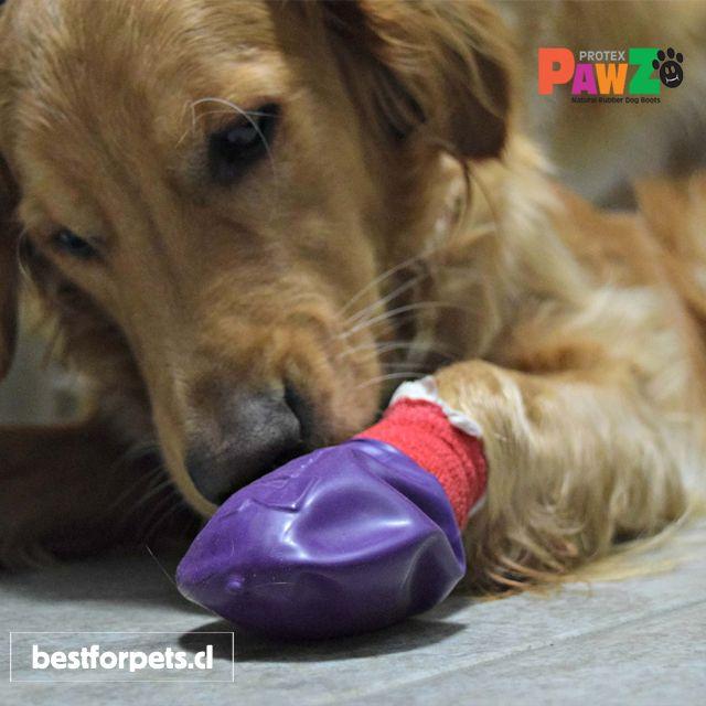Pawz Dog Boots son perfectas para proteger pequeñas heridas en las patitas de los perros. Ideales para los perritos que han pasado por una cirugía recientemente