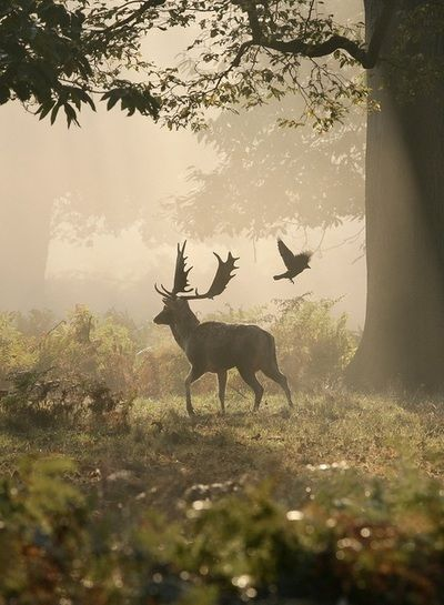 Stag and Raven