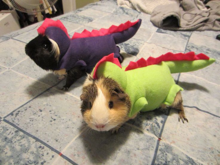 Guinea pigs dressed as dinosaurs