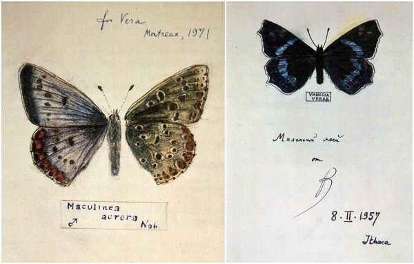 The Drawings of Butterflies by Vladimir Nabokov (1)