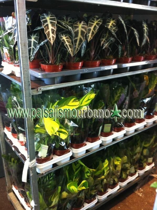 Mejores 11 im genes de jardin vertical interior oficina for Jardin vertical oficina