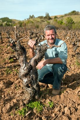 Forgotten Jewels: Reviving Chile's Old Vine Carignane    As a child, the lure of archeology cannot be denied. Fantasies of discovering ancient treasures fuel the dreams of many youngsters, as they did my adolescent imagination. These days, such notions have been replaced in my life with interests no less exciting in the wine world. For the curious wine lover, opportunities abound to explore the treasures of the past in the form of old vines, recently discovered... Read More.