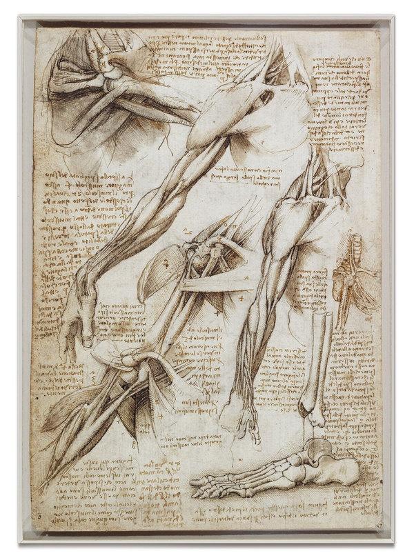 11 best Scientific & Naturalist Drawings images on Pinterest ...