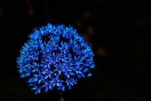 Desktop Wallpaper: Blue Flower
