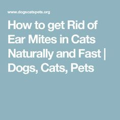 How to get Rid of Ear Mites in Cats Naturally and Fast | Dogs, Cats, Pets