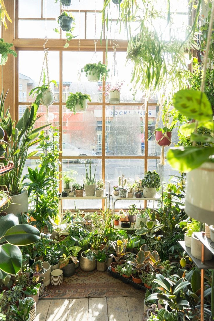 Conservatory Archives In London Plants House Plants Decor