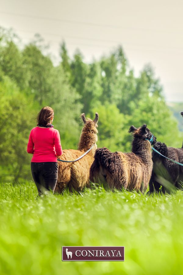 A walk with llamas, what a great idea! :) More infos: http://coniraya.com.pl/alpaki/lamy/