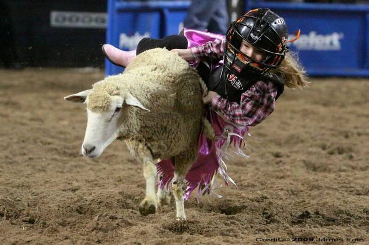 Mutton Busting  is both child abuse and animal abuse