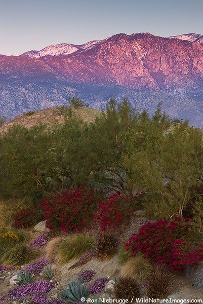 San Jacinto Mountains, Coachella Valley, California; photo by Ron Niebrugge