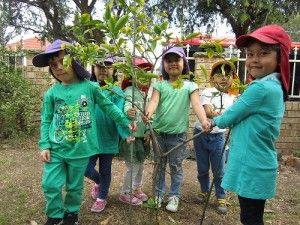 Lidcombe Preshool, NSW. Group Enviroweek tree hug. #enviroweek13