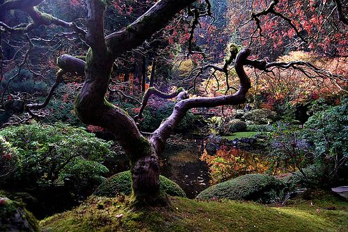 This looks like the real life Wonderland.: Secret Gardens, Favorite Places, Japan Beautiful, Japanese Gardens, Japan Gardens, Dr. Suess, Asian Gardens, Portland Oregon, Fairies Tales