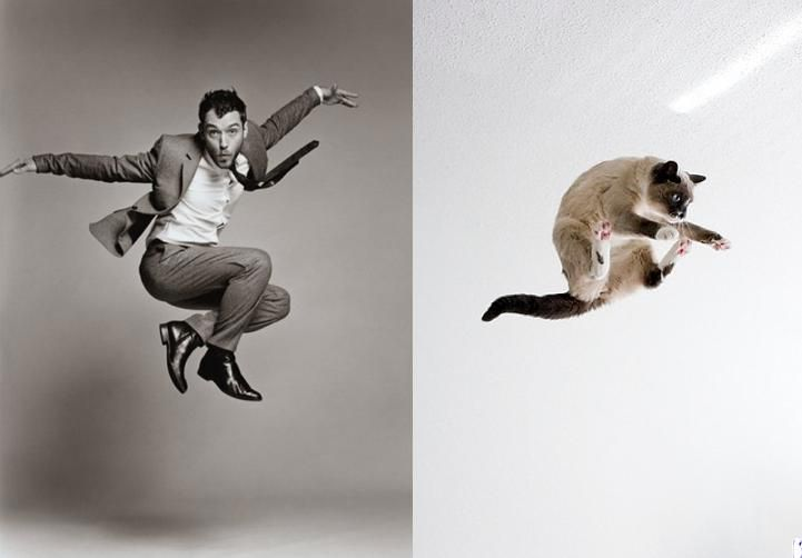 Cats Recreate Awesome Male/Female Modeling Poses (10 Pics ...