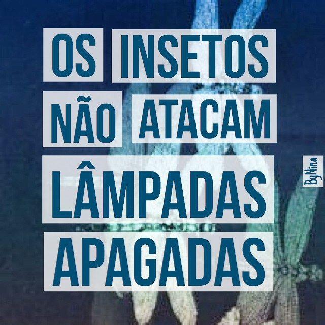 """@instabynina's photo: """"Os insetos não atacam lâmpadas apagadas. Para bom entendedor... #autordesconhecido #boanoite #seafastedeinsetos #brilhe #instabynina"""""""
