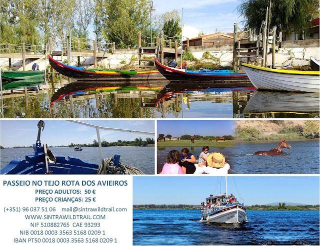 Sintra - take a walk on the wild side: Nova actividade disponível! Passeios no Tejo!