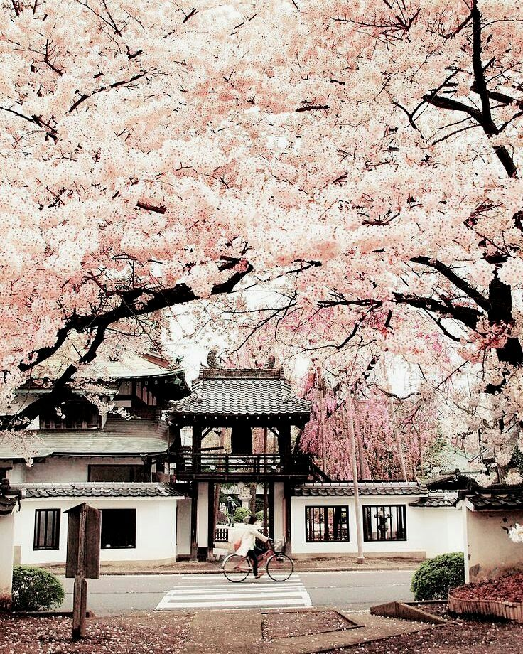 Sendai Miyagi Prefecture Japan Cherry Blossoms Of Shouonji Temple Earthroulette Japan Temples Japan Landscape Beautiful Places Japan Travel