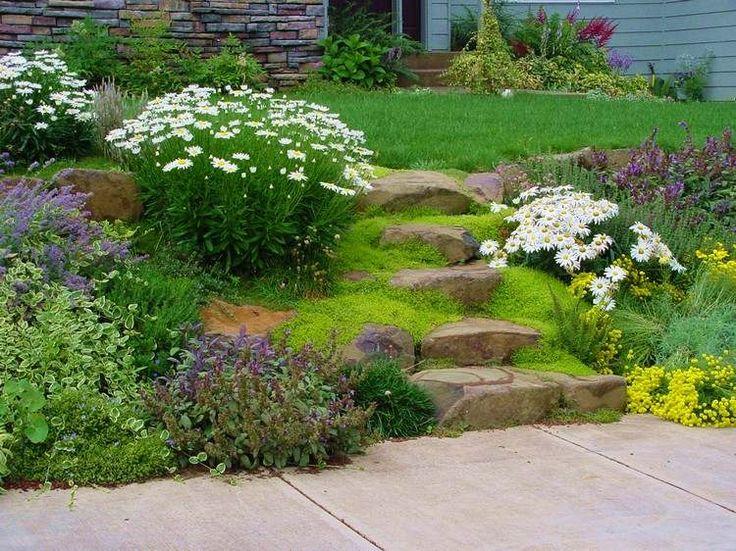 plantes couvre sol, marguerites, fleurs et marches en pierre naturelle