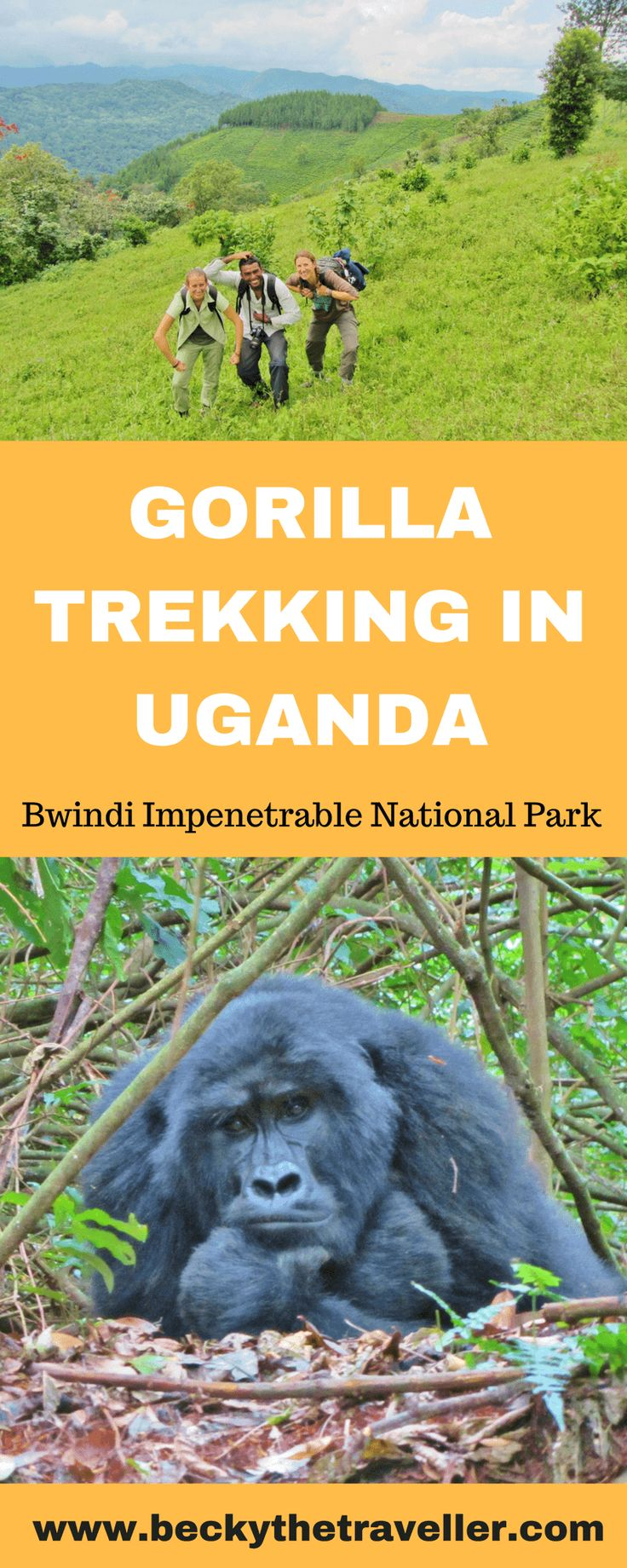 Gorilla trekking in Uganda – seeing the beautiful mountain gorillas. Is gorilla trekking in Uganda on your bucket list? But maybe the high costs are putting you off. Read about my experience gorilla trekking in Bwindi Impenetrable National Park in Uganda. I share my experience and give you some top tips for the trek. Wildlife experiences | Gorilla trekking | Gorilla safaris | Uganda gorillas | Visit Uganda