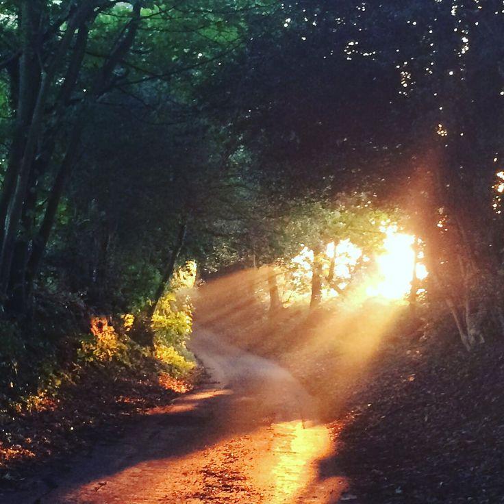 My little lane, October sun.