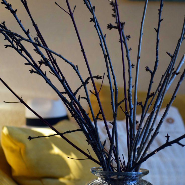 Am Barbara-Tag (4. Dezember) geschnittene Kirschbaumzweige blühen zu Weihnachten. Man kann auch Zweige von Forsythien, Haselnuss und Kastanien verwenden.